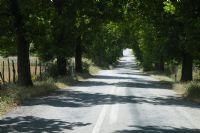 Yol Ve Gölge