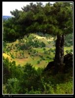 Yoncalı Köyü