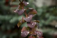 Yağmurdan Sonra...