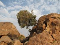 Kayadan Fışkıran Hayat