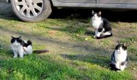 Kedi Üçgeni :)