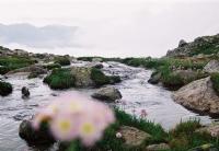 Göl Çekimi
