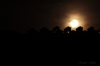 Sessiz Bir Gece