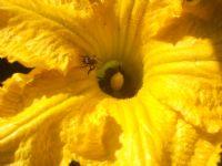 Arılar İşbaşında