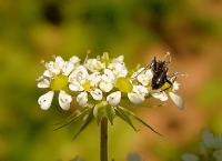 Çiçek Ve Karınca