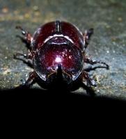 Makro Böcek