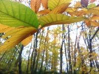 İğneada Longoz Ormanları