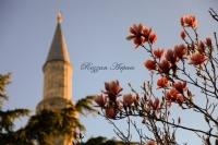 Çiçek Ve Minare...
