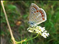 Kelebek-3