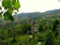 Of Çamlı Tepe Köyü