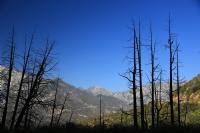 Ağaç Silüetleri