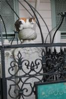 Kediye Bak Oturduğu Yere Bak