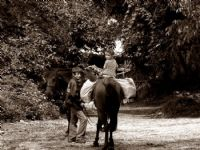 Samet Beyin Bir Atı Var Adı Küheylan