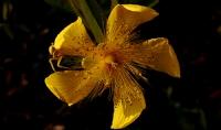 Çiçek & Örümcek_2