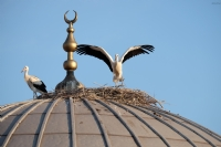 Yuvayı Yapan Dişi Kuş...