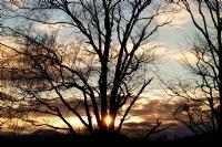 Ağaçlar Ve Güneş