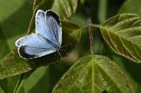 Kutsal Mavi