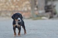 Küçük Dostumuza Merhaba :)