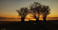 Işıklı Gölünden