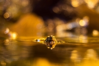 Amfibik