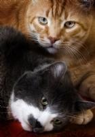 Kedilerin Hüznü