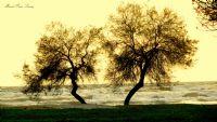 Gunes, Dalgalar Ve 2 Ağaç.....