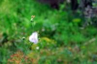 Doğadan