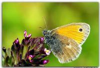 Kelebek-ıı