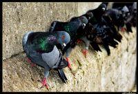 Sıralı Kuş