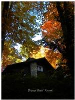 Yapraklar Sararınca Başka Güzel ...