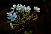 Zamansız Açan Çiçekler