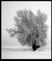 Ağaçlar-1