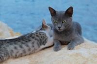 Kedi Kedi