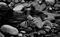 'suda Ki Güvercinler'