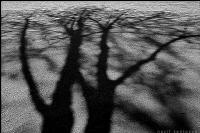 Bir Ağacın Gölgesinde..