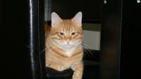 Kedi :)