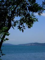 Ağaç Dalından Denize Bakış...