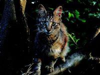 Daldaki Kedicik