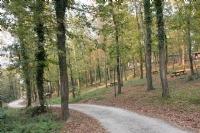Sakarya İl Ormanı