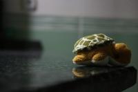 Kaplumbağa...