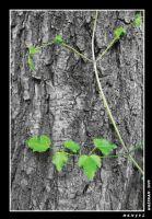 Ağaç1