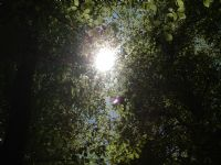 Yedigöllerde Gün Işığı