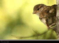 Kuşcuk