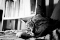 Mişa'nın Uykusu