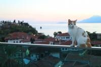 Cambaz Kedi