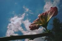 Makro Çiçek (ters Işık)_5