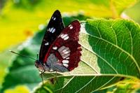 Doğanın Güzellikleri