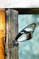 """Miniciks Hayatlar """" Kelebek """""""