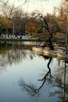 Su Ve Ağaç