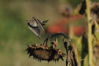 Kuşun Kalkışı